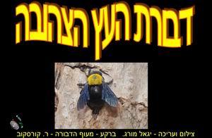 דבורת העץ הצהובה