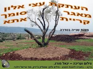העתקת עצי אלון במאגר סומך