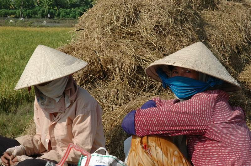 וייטנאם - מנוחה בשדה האורז