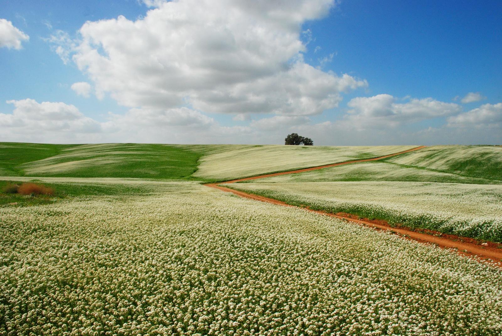 טוריים מצויים בשדות הנגב