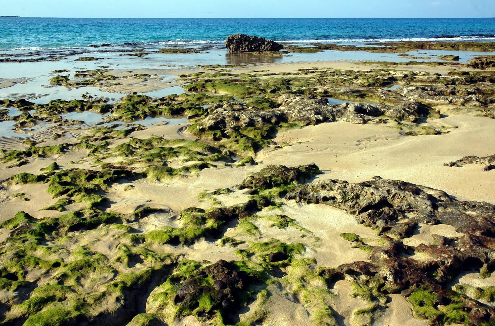 חוף בשפל