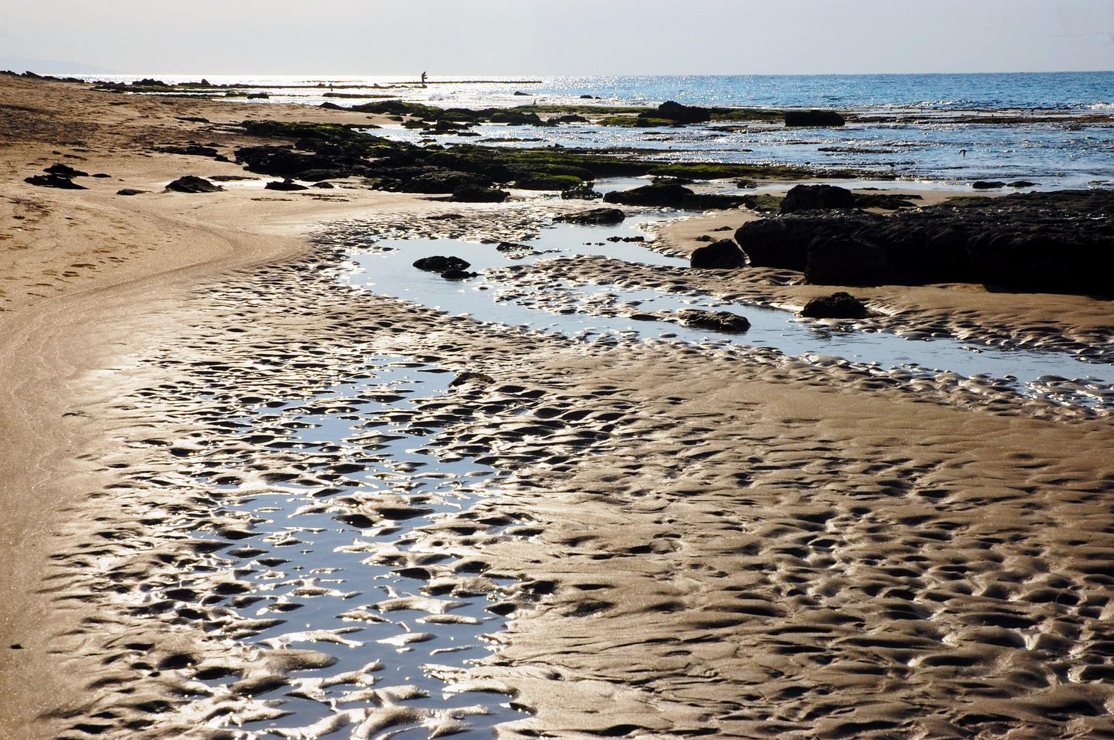שלוליות בחוף הים