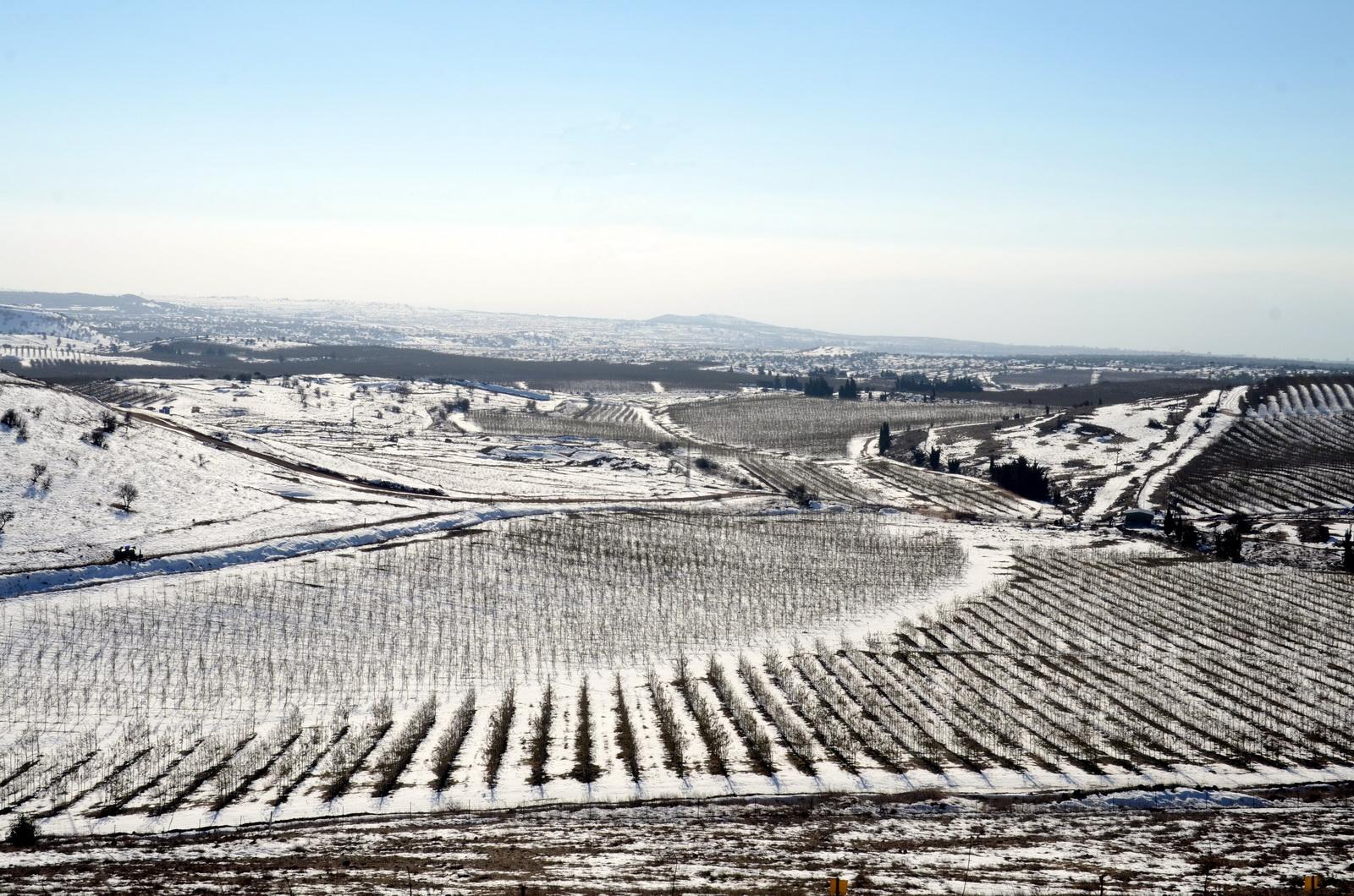 גולן - מטעי עין זיוון בשלג