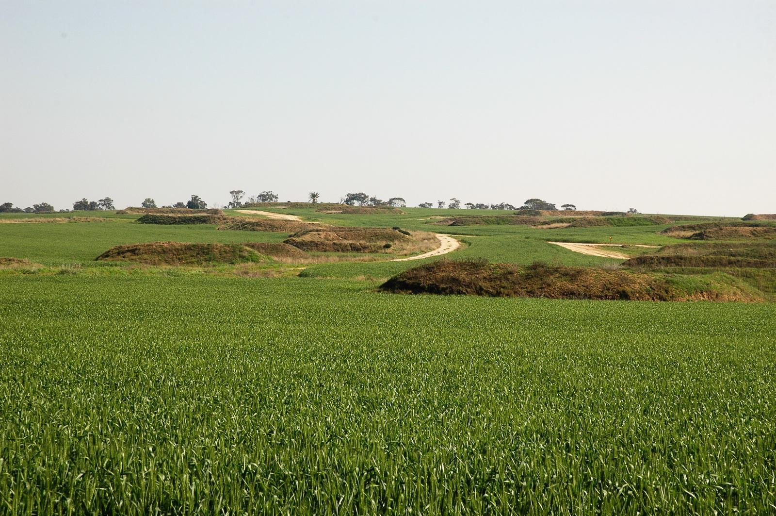 נגב מערבי - שדות חיטה בבארי