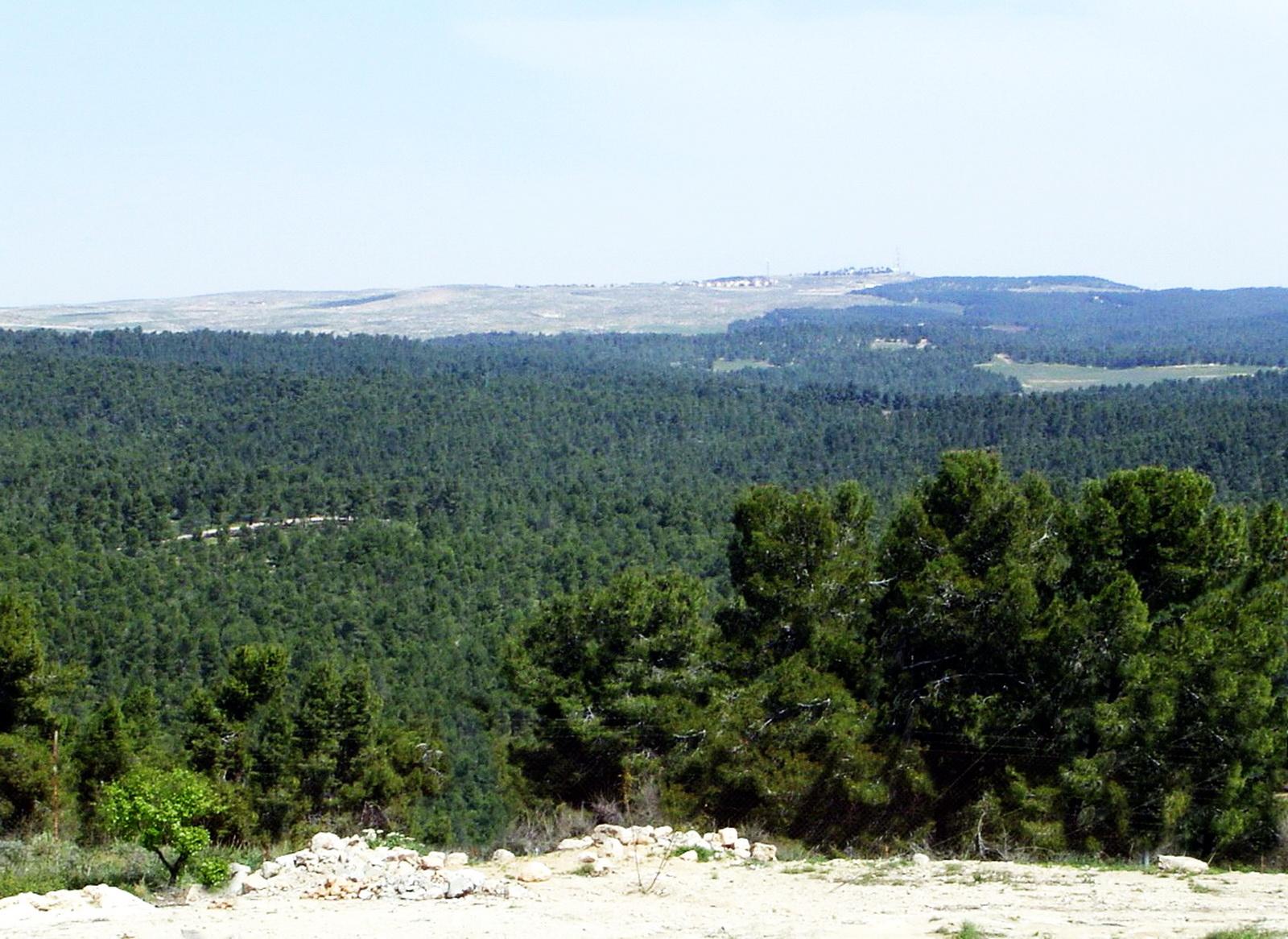יער יתיר