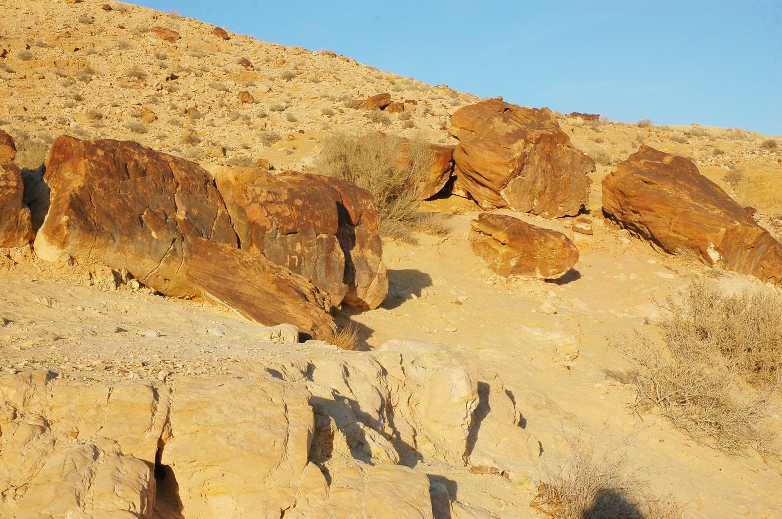 המכתש הגדול - גזעי עצים מאובנים
