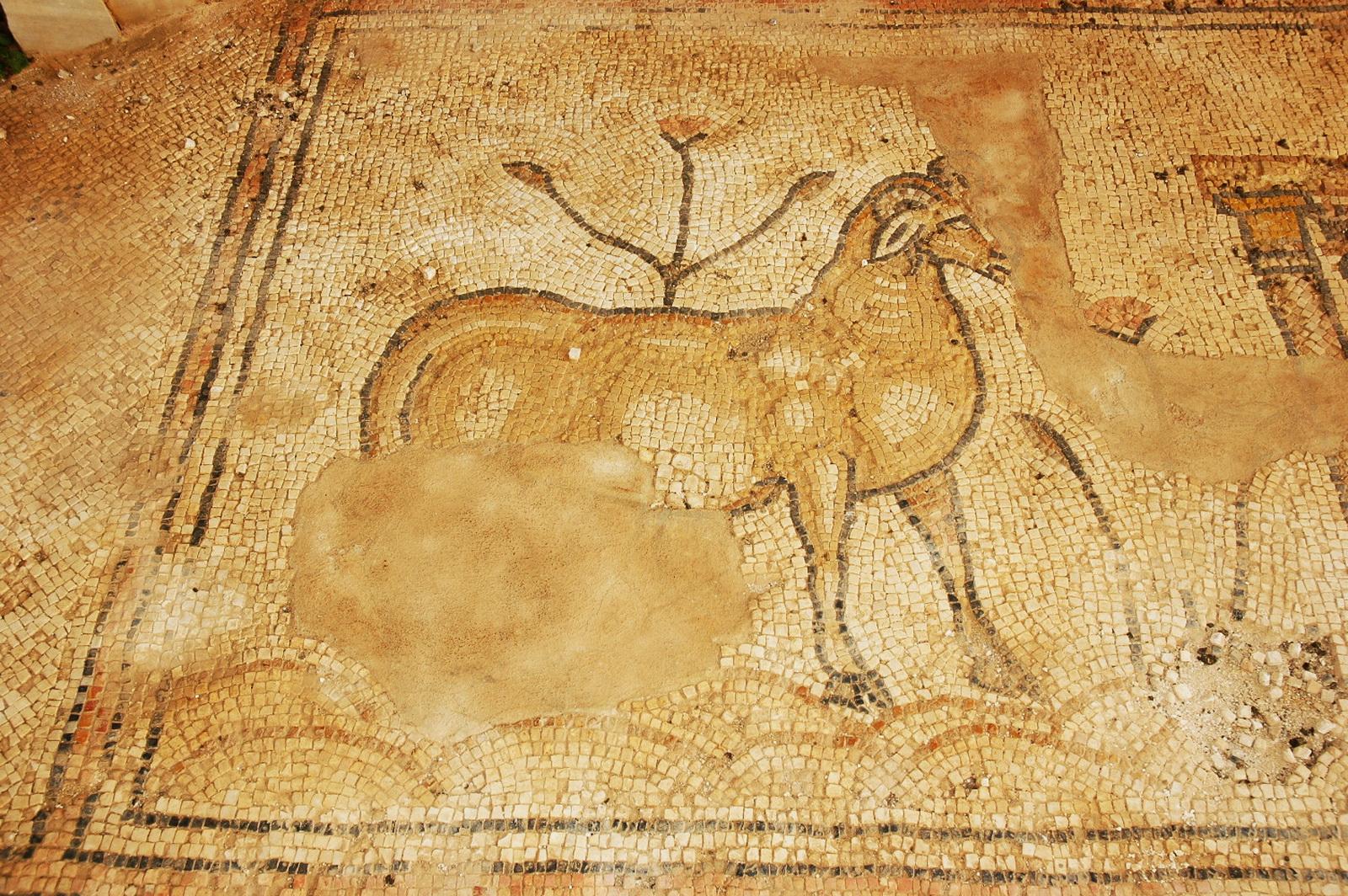 סוסיא - בעל חיים בפסיפס הרצפה
