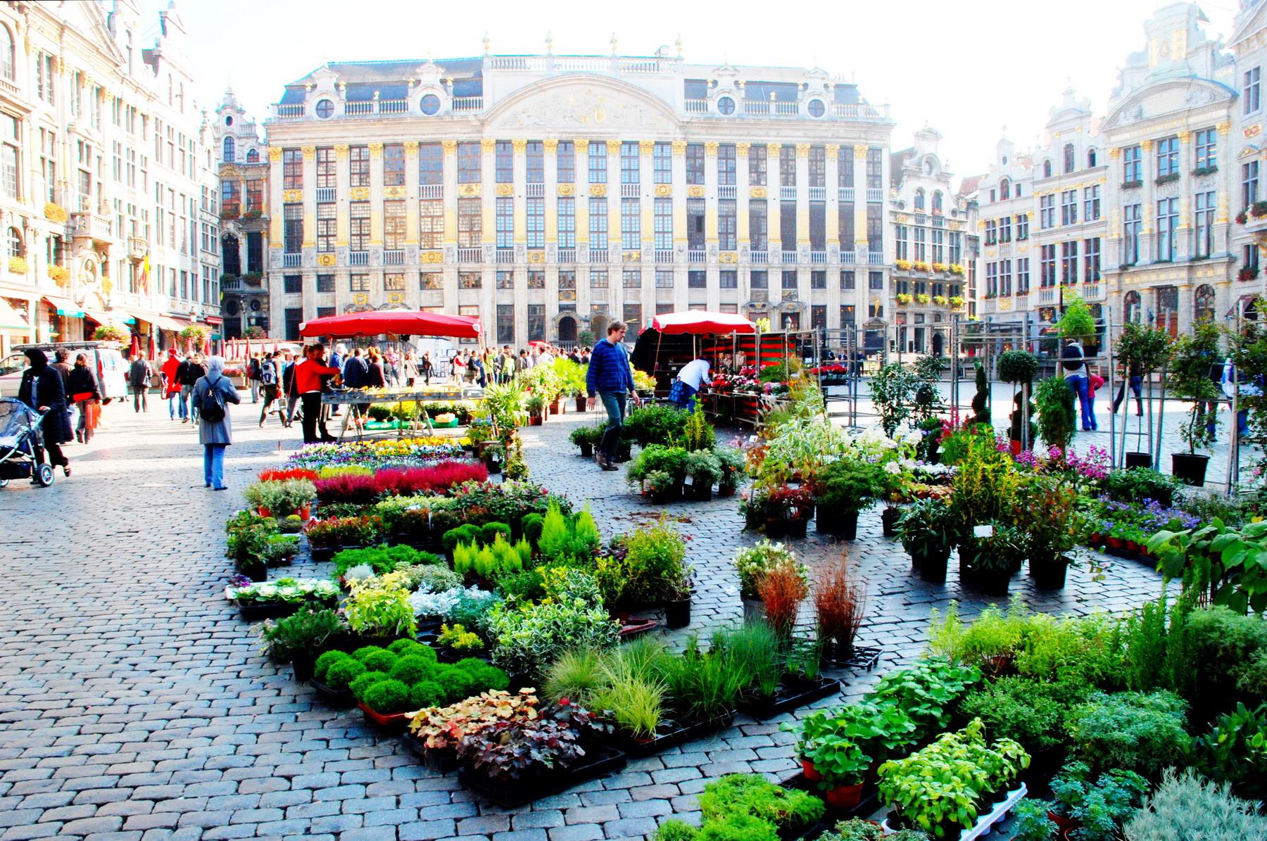 כיכר העיר העתיקה - שוק צמחייה